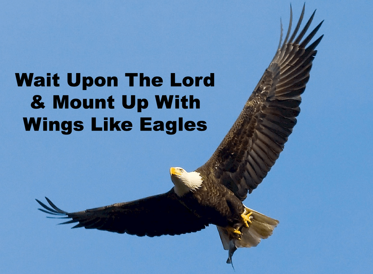 They That Wait Upon The Lord Shall Renew Their Strength & Mount Up With Wings Like Eagles